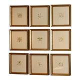 Set of Botanical Engravings (Four Left) $550 Each