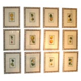 Set of Twelve Antique Hand Colored Etchings of Fruit