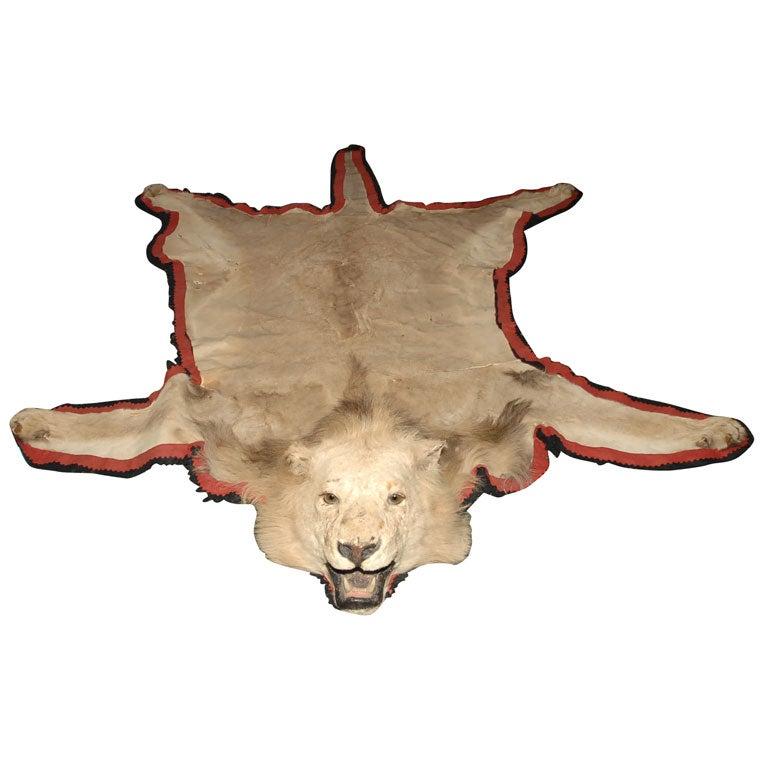 Large Antique Lion Skin Rug At 1stdibs