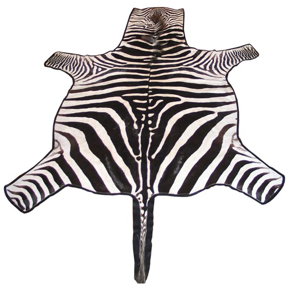 Trophy Grade Zebra Skin Rug With Felt Backing At 1stdibs