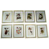 Set of  Framed Bird Prints