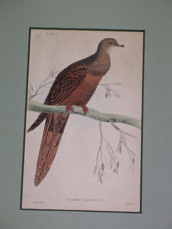 Wood Hand Colored Bird Engravings, circa 1890s For Sale