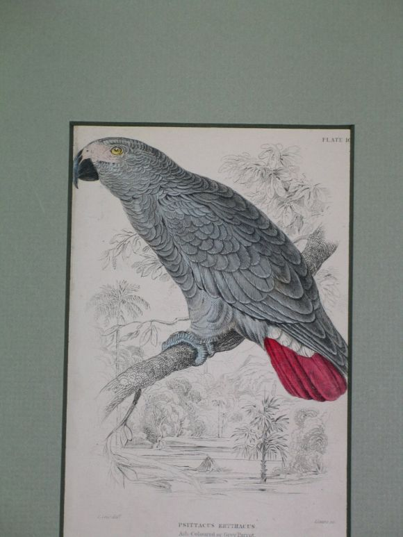 Mid-20th Century Hand Colored Bird Engravings, circa 1890s For Sale