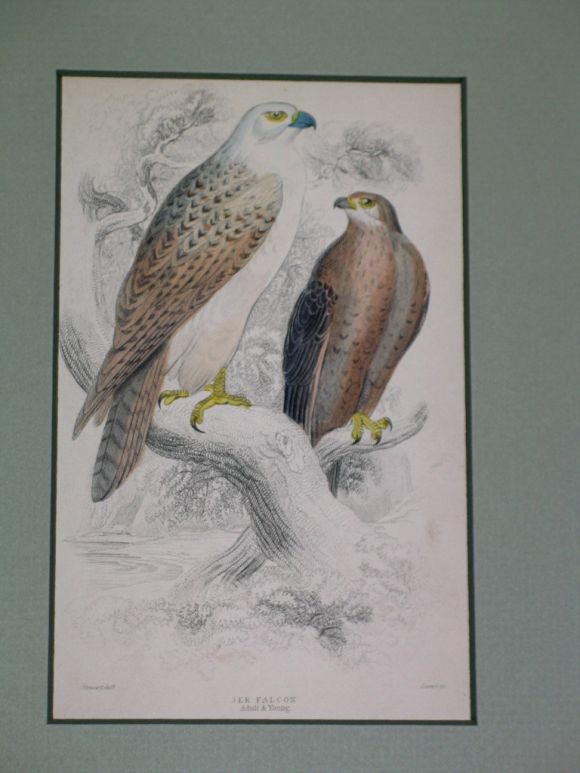 Hand Colored Bird Engravings, circa 1890s For Sale 3
