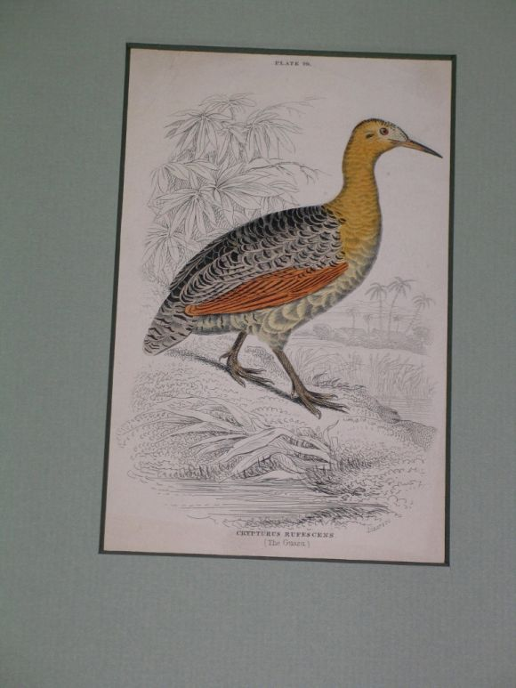 Hand Colored Bird Engravings, circa 1890s For Sale 4