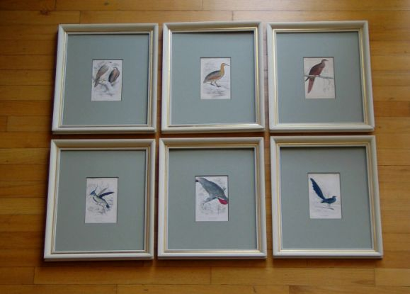 Hand Colored Bird Engravings, circa 1890s In Excellent Condition For Sale In Douglas Manor, NY