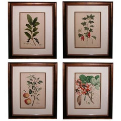 Four Large- Scaled German Hand-Colored Botanical Lithographs