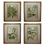 A Set of Four Johann Weinmann Hand-Colored Engravings