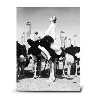 Norman Parkinson, Wenda and Ostriches, 1951