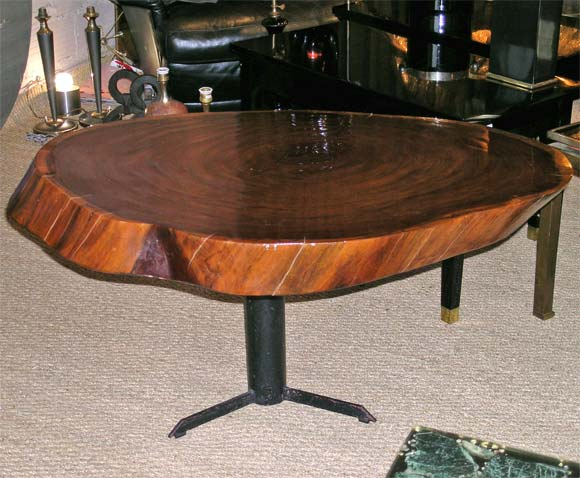 Varnished Tree Trunk Coffee Table At 1stdibs