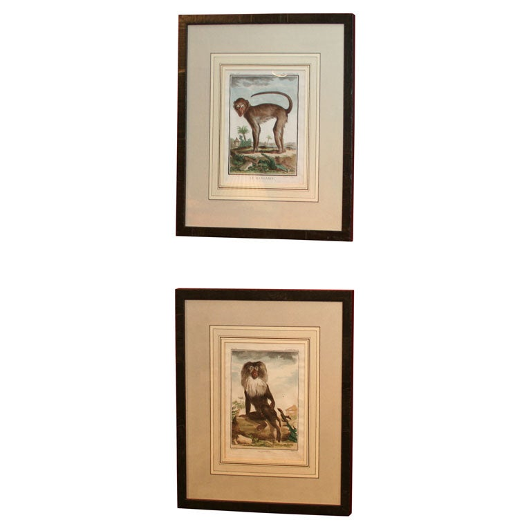 Pair of 18th Century Naturalist Engravings of Monkeys