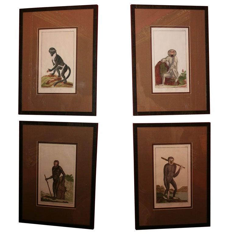 Set of Four 18th Century Naturalist Engravings of Monkeys