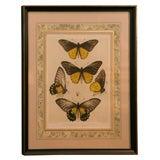 Print of Butterflies Framed