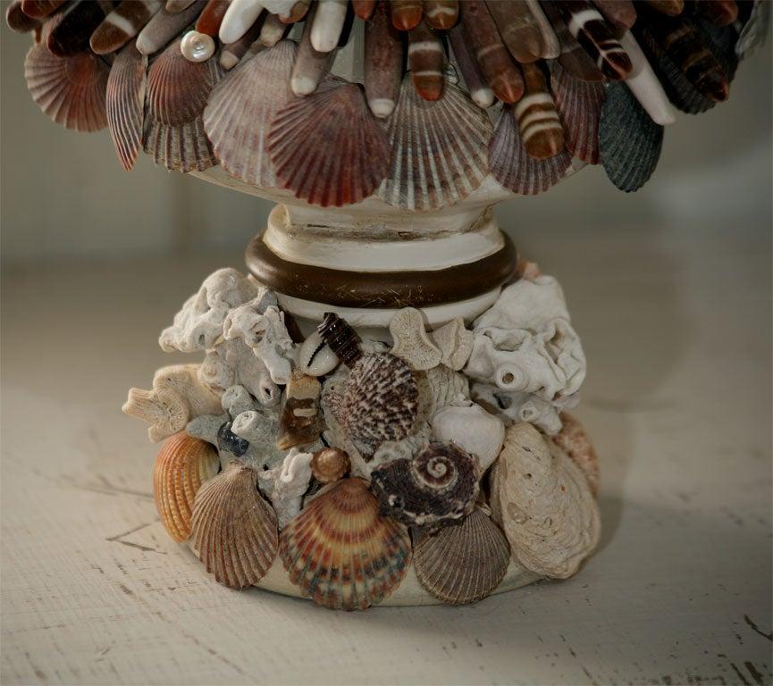 Fanciful Sea Shell Bust 1