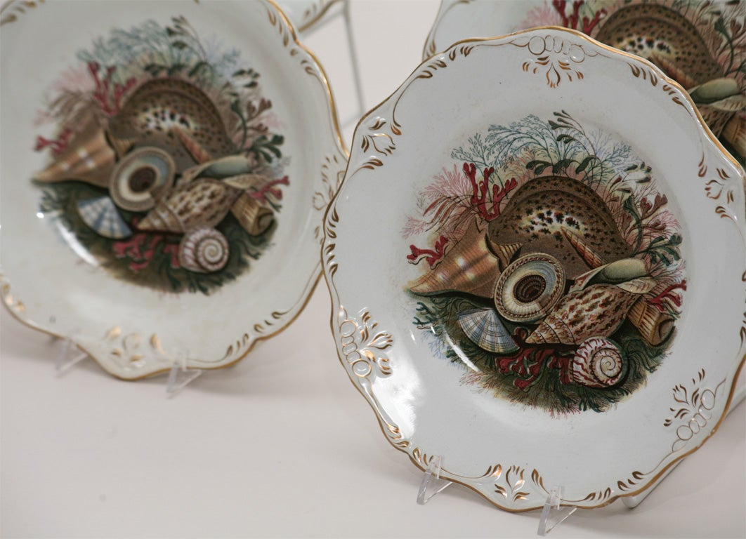 19th C. English Dessert Set With Shells For Sale 2