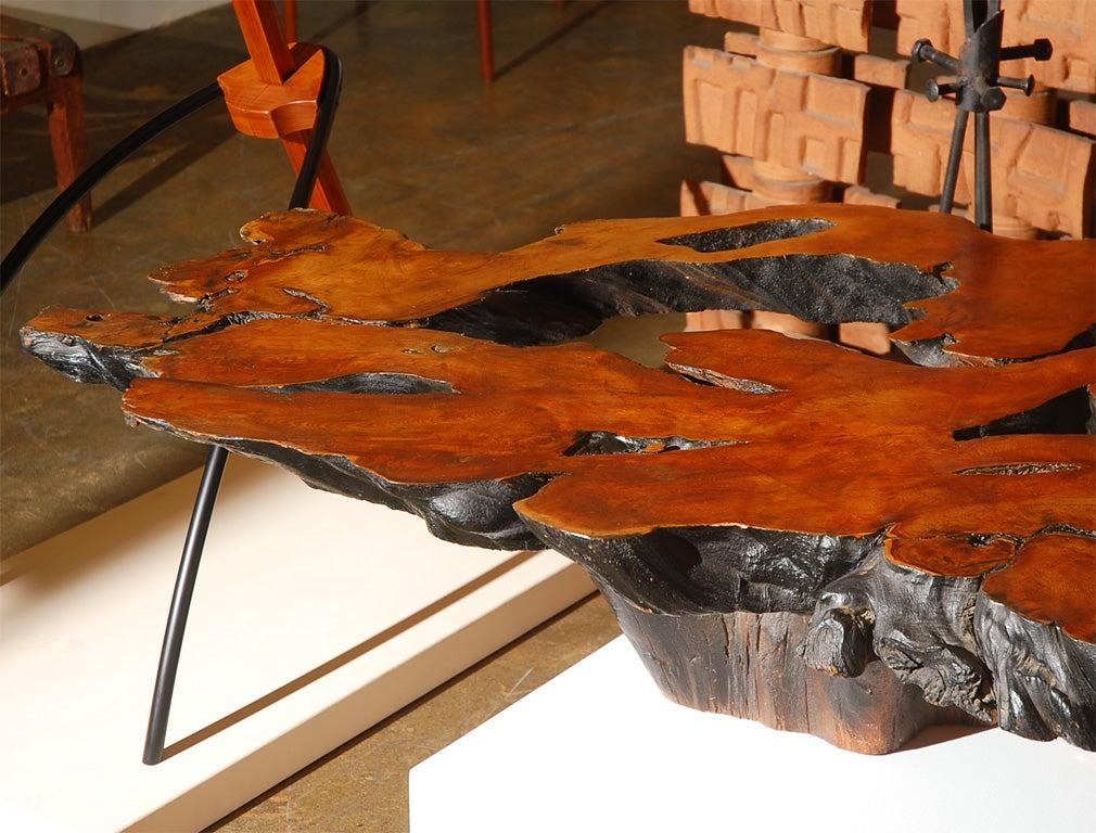 Massive tree cut burled redwood coffee table at 1stdibs for Tree slice coffee table