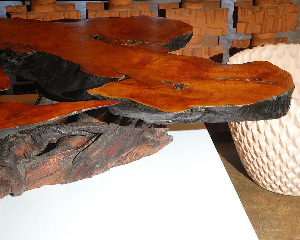 Massive Tree Cut Burled Redwood Coffee Table At 1stdibs