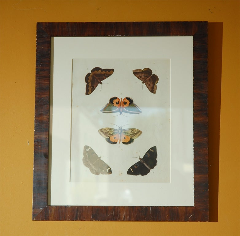 Set of eight framed antique hand colored lithographs of butterfly studies by Pierre Cramer of Amsterdam. Printed in 1791 posthumously.