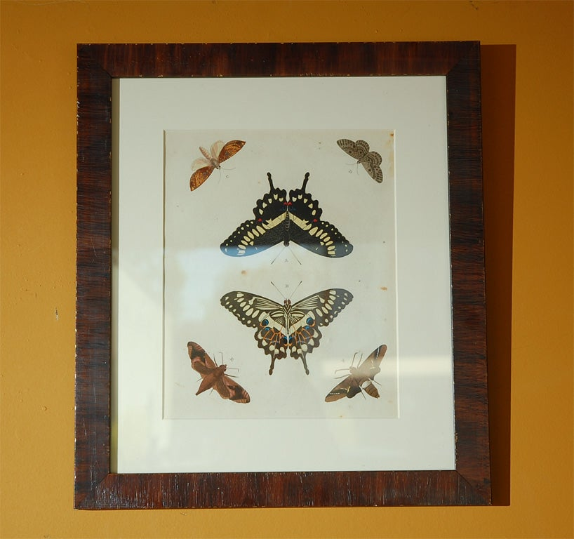 Dutch Antique Butterfly Prints Set of Eight For Sale