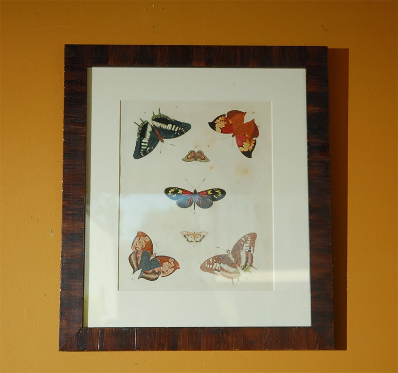 Antique Butterfly Prints Set of Eight In Good Condition For Sale In Los Angeles, CA