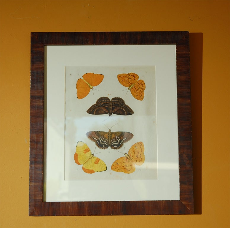 18th Century Antique Butterfly Prints Set of Eight For Sale