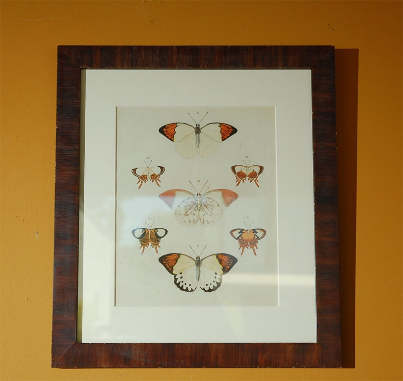 Paper Antique Butterfly Prints Set of Eight For Sale
