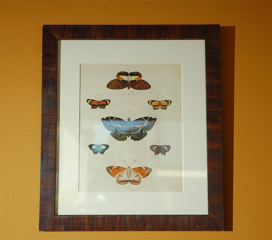 Antique Butterfly Prints Set of Eight For Sale 1
