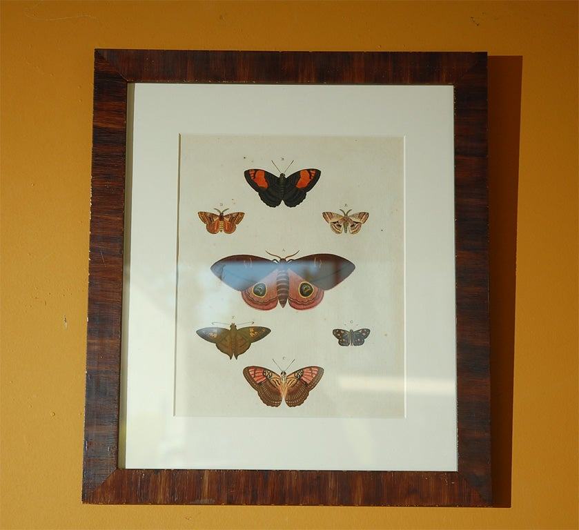 Antique Butterfly Prints Set of Eight For Sale 2