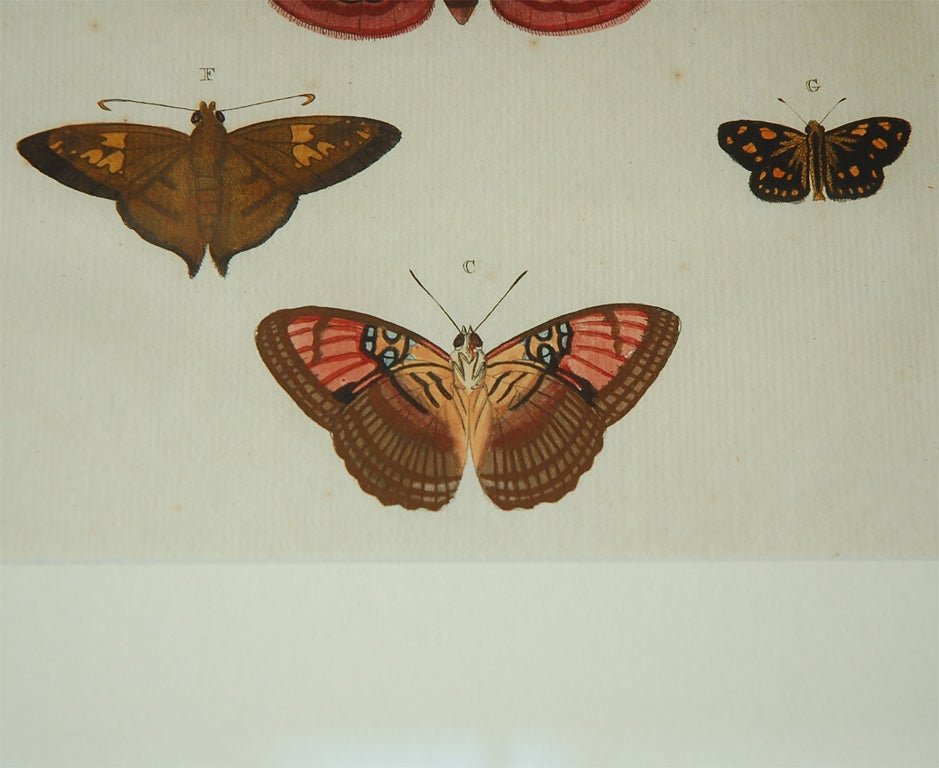 Antique Butterfly Prints Set of Eight For Sale 3