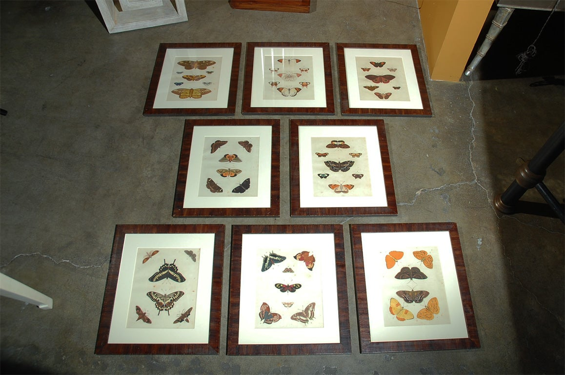 Antique Butterfly Prints Set of Eight For Sale 4