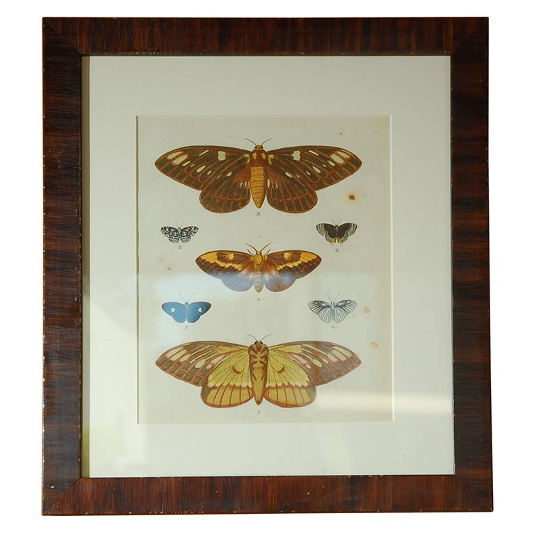 Antique Butterfly Prints Set of Eight For Sale