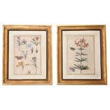 Pair of Antique Floral Engravings
