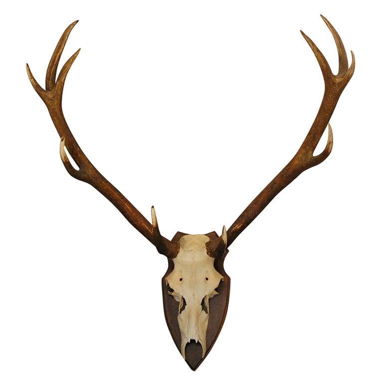 Large Deer Horn Wall Plaque