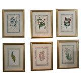 Set of 6 Botanical Prints
