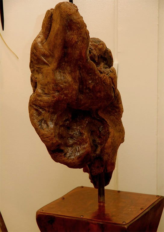 Root Sculpture With Pedestal By Laurie Tucker For Sale At