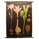 Vintage Botanical Print Chart  on Linen