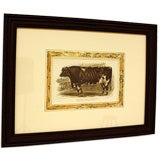 Antique English Cow and Bull Engravings, Hand-Colored