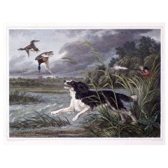 Eight Antique FRAMED  English Engravings of Dogs, Hand Colored
