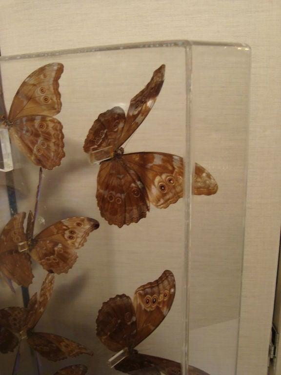 A Fantastic Sculpture Arrangment of Blue Morpho Butterflies 8