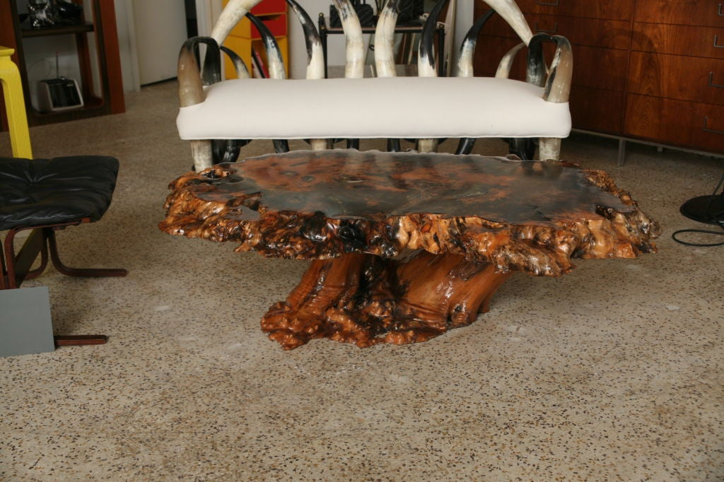 Vintage over sized burled cypress coffee table at 1stdibs for Cypress slab coffee table