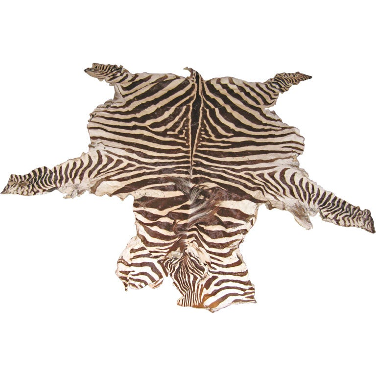 Antique Zebra Skin Rug At 1stdibs