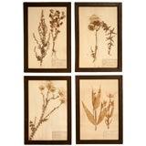 c.1890 French Framed Botanicals Set