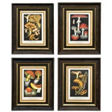 French Set Four Mushroom Chromolithographs