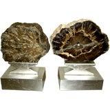 2 magnificent large specimen Petrified wood polished slabs