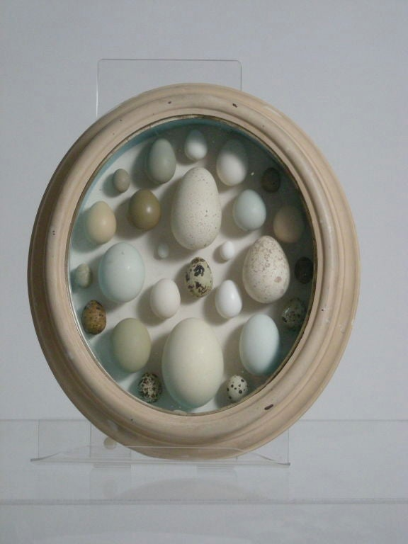 19th C Shadow Box With Birds Eggs At 1stdibs
