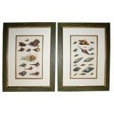 Set of Four 18th Century Hand-Colored Engravings of Shells