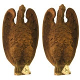 An Important Pair of French 18th c. Terra Cotta Eagle Sculptures