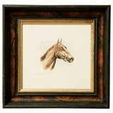 Watercolor equestrian horse