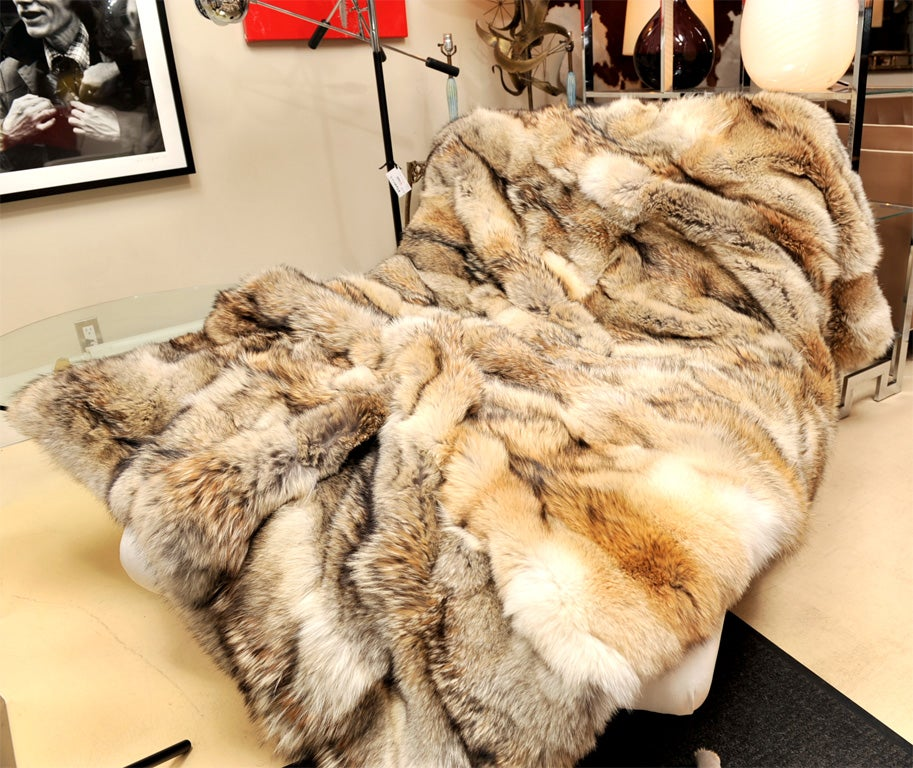 Coyote Throw At 1stdibs