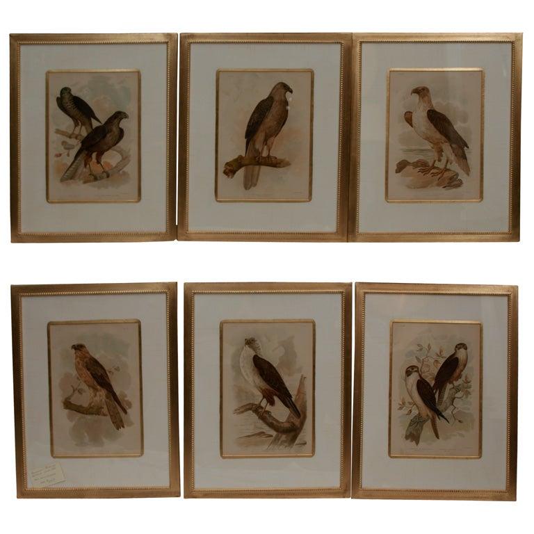 Set Of Six Handcoloured Prints At 1stdibs
